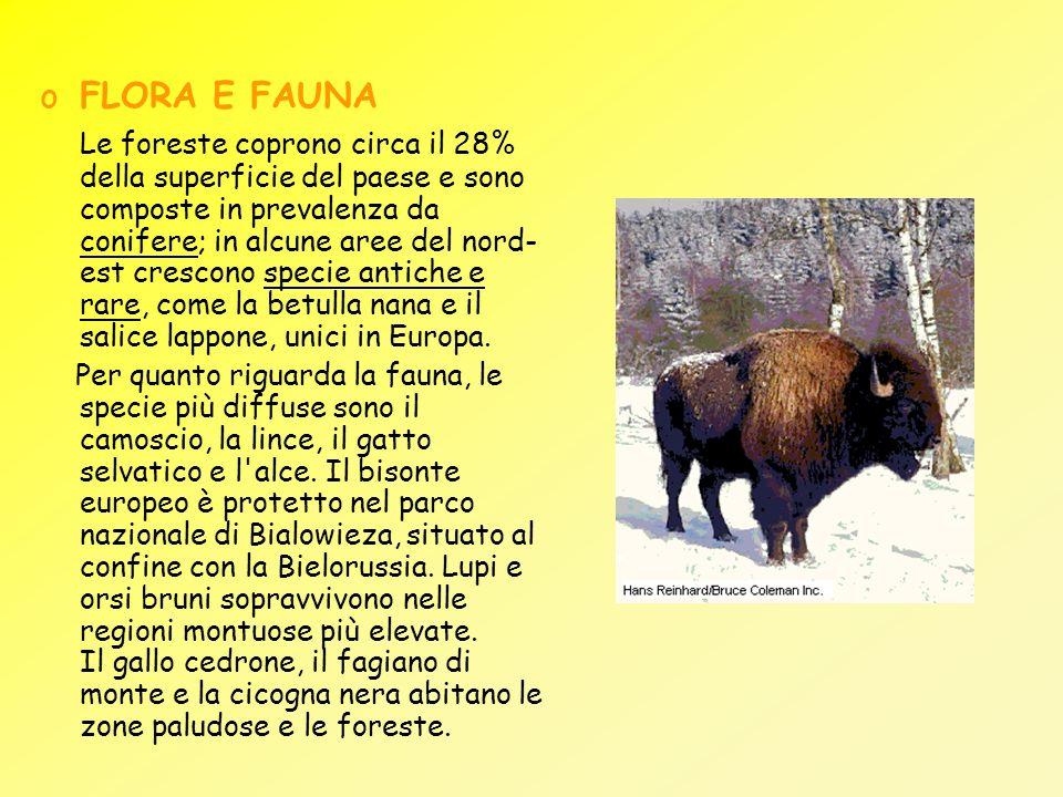 oFLORA E FAUNA Le foreste coprono circa il 28% della superficie del paese e sono composte in prevalenza da conifere; in alcune aree del nord- est cres