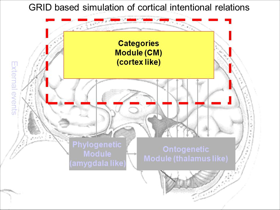 Ontogenetic Module (thalamus like) Phylogenetic Module (amygdala like) External events Categories Module (CM) (cortex like) GRID based simulation of cortical intentional relations