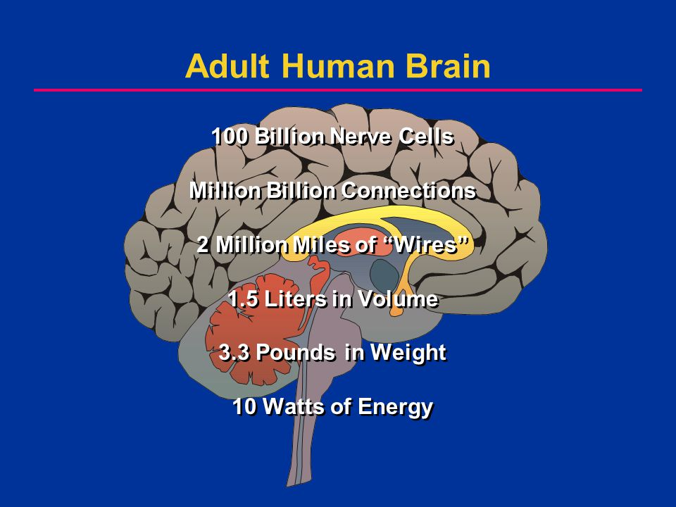 What.Where. How. NormalDisease Man Animal How Does the Brain Work.