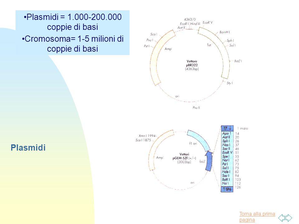 Torna alla prima pagina Plasmidi Plasmidi = 1.000-200.000 coppie di basi Cromosoma= 1-5 milioni di coppie di basi