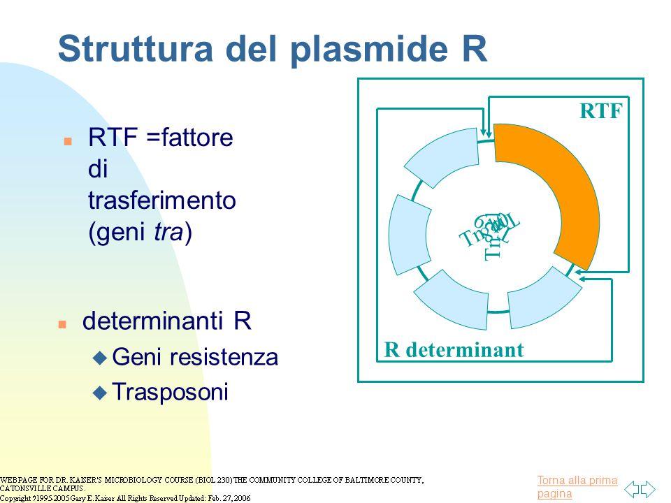 Torna alla prima pagina Struttura del plasmide R n RTF =fattore di trasferimento (geni tra) Tn 9 Tn 21 Tn 10 Tn 8 RTF R determinant n determinanti R u
