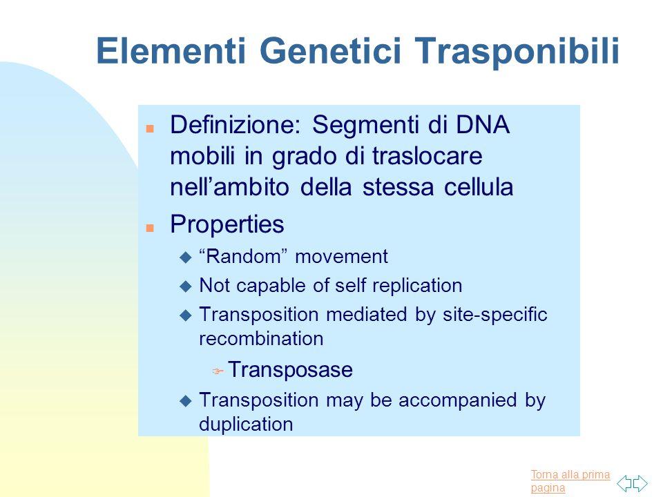 Torna alla prima pagina Elementi Genetici Trasponibili n Definizione: Segmenti di DNA mobili in grado di traslocare nell'ambito della stessa cellula n