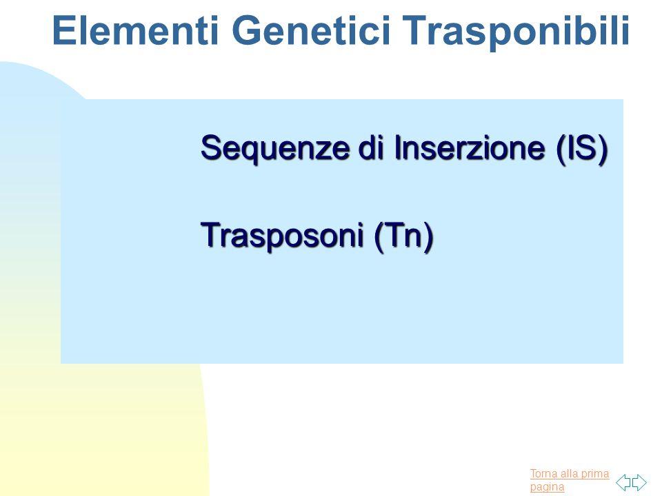 Torna alla prima pagina Elementi Genetici Trasponibili Sequenze di Inserzione (IS) Trasposoni (Tn)