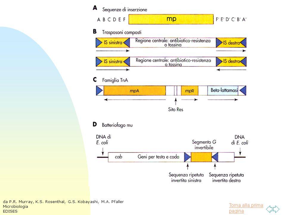 Torna alla prima pagina da P.R. Murray, K.S. Rosenthal, G.S. Kobayashi, M.A. Pfaller Microbiologia EDISES
