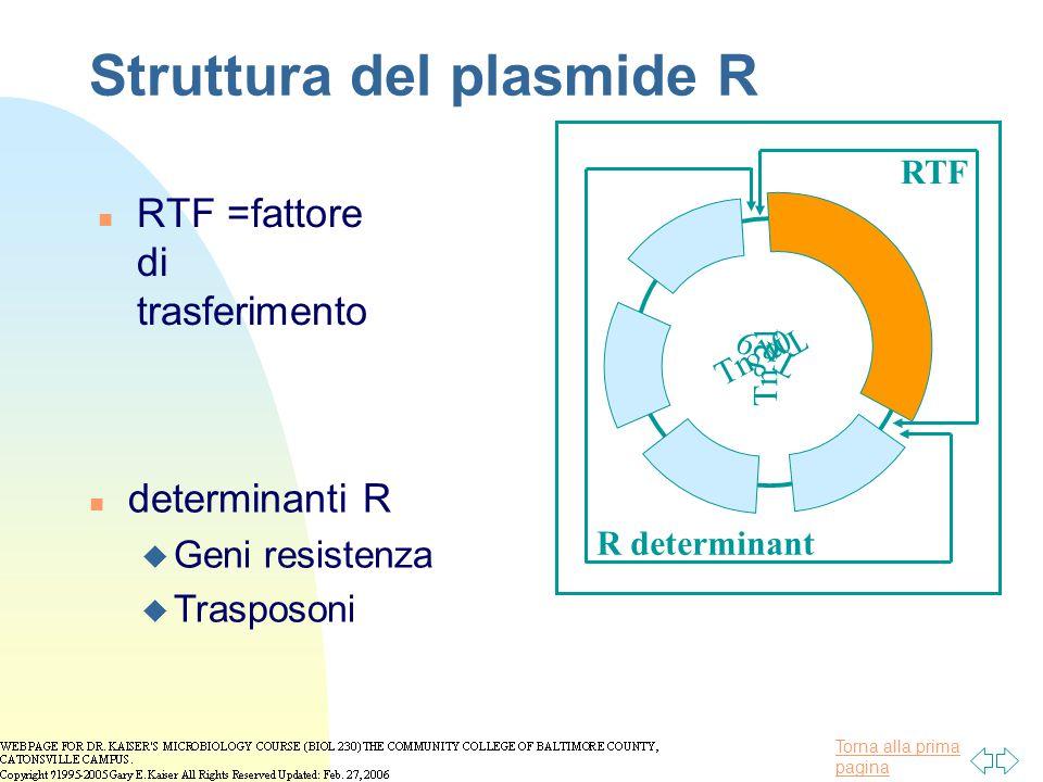 Torna alla prima pagina Struttura del plasmide R n RTF =fattore di trasferimento Tn 9 Tn 21 Tn 10 Tn 8 RTF R determinant n determinanti R u Geni resis