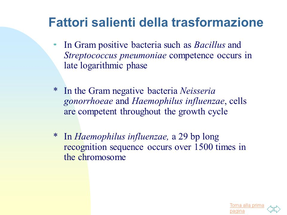 Torna alla prima pagina Fattori salienti della trasformazione * In Gram positive bacteria such as Bacillus and Streptococcus pneumoniae competence occurs in late logarithmic phase *In the Gram negative bacteria Neisseria gonorrhoeae and Haemophilus influenzae, cells are competent throughout the growth cycle *In Haemophilus influenzae, a 29 bp long recognition sequence occurs over 1500 times in the chromosome