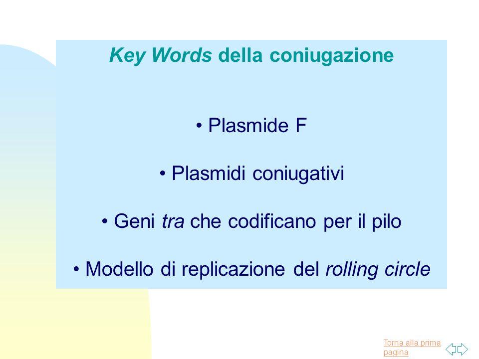 Torna alla prima pagina Key Words della coniugazione Plasmide F Plasmidi coniugativi Geni tra che codificano per il pilo Modello di replicazione del r