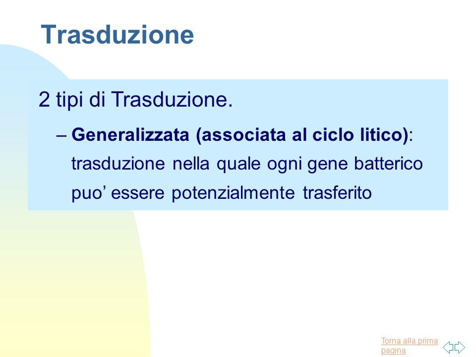 Torna alla prima pagina Trasduzione 2 tipi di Trasduzione. –Generalizzata (associata al ciclo litico): trasduzione nella quale ogni gene batterico puo