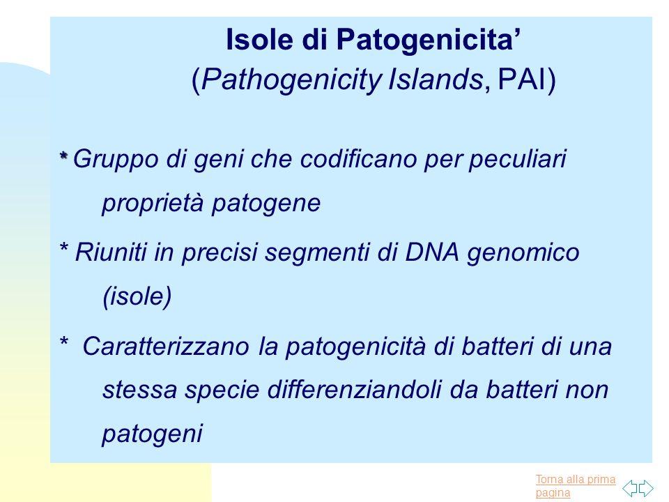 Torna alla prima pagina Isole di Patogenicita' (Pathogenicity Islands, PAI) * * Gruppo di geni che codificano per peculiari proprietà patogene * Riuni