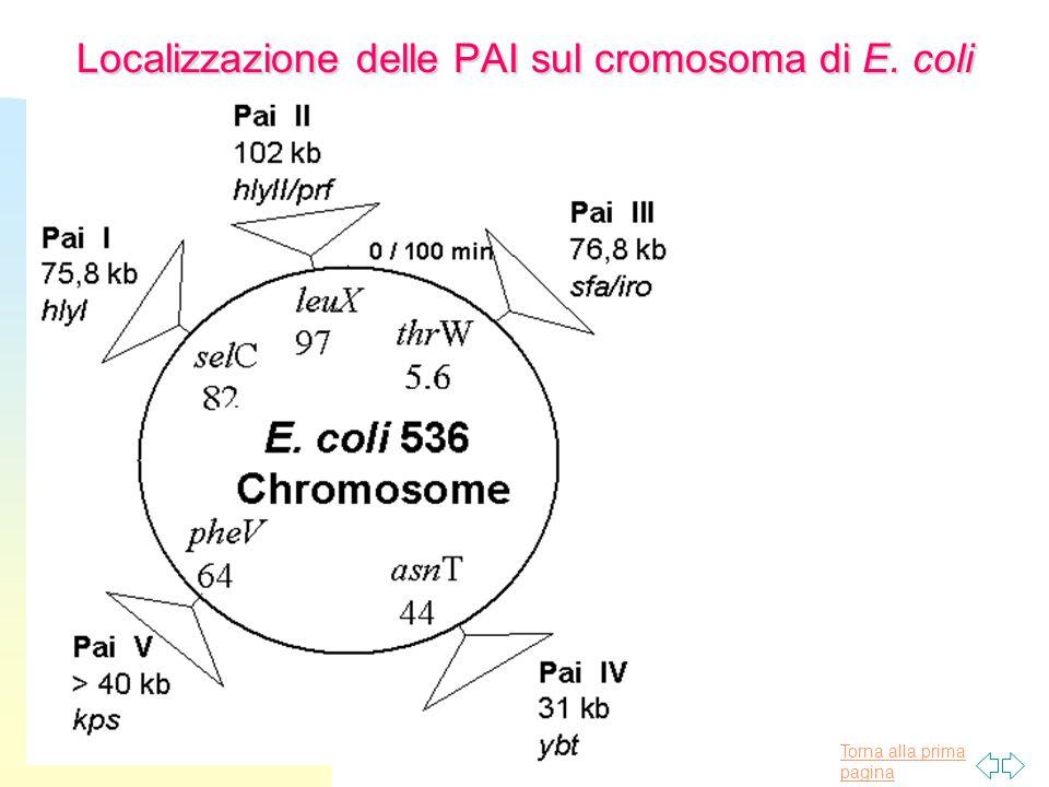 Torna alla prima pagina Localizzazione delle PAI sul cromosoma di E. coli
