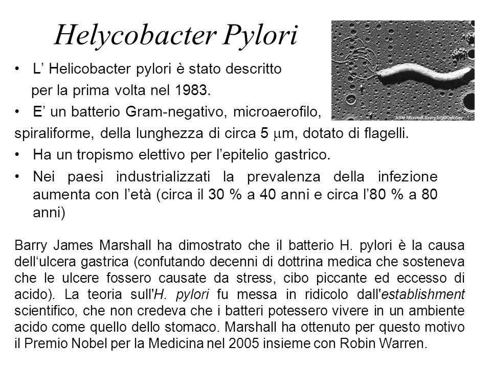 L' Helicobacter pylori è stato descritto per la prima volta nel 1983. E' un batterio Gram-negativo, microaerofilo, spiraliforme, della lunghezza di ci