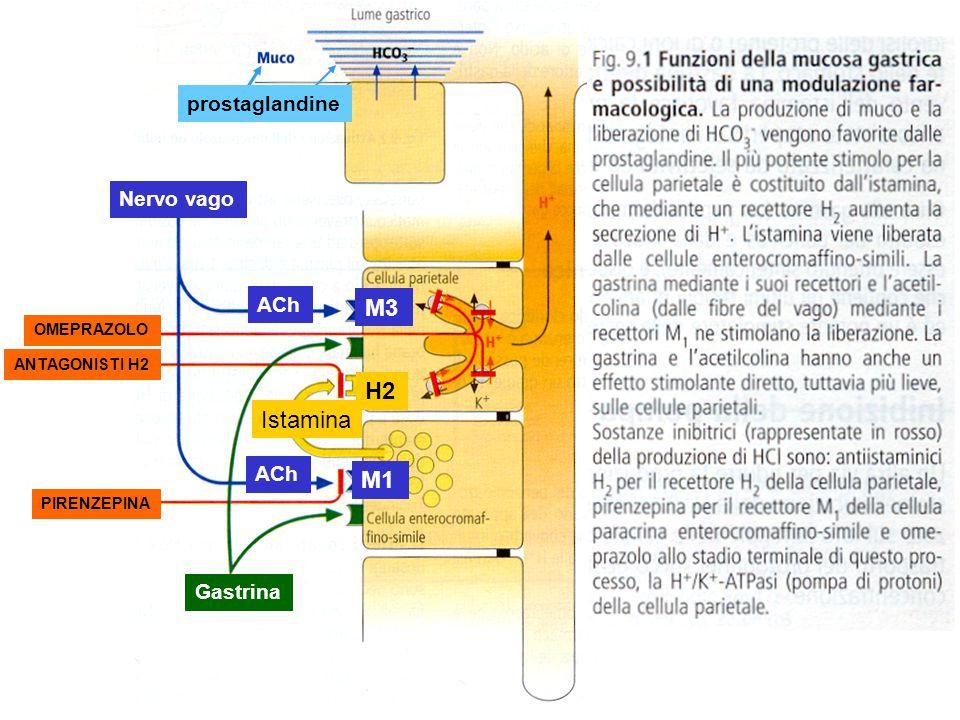 PIRENZEPINA ANTAGONISTI H2 OMEPRAZOLO Istamina ACh Nervo vago Gastrina ACh M1 H2 M3 prostaglandine