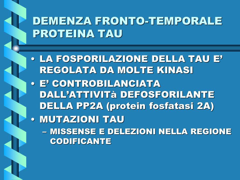 DEMENZA FRONTO-TEMPORALE PROTEINA TAU LA FOSPORILAZIONE DELLA TAU E' REGOLATA DA MOLTE KINASILA FOSPORILAZIONE DELLA TAU E' REGOLATA DA MOLTE KINASI E' CONTROBILANCIATA DALL'ATTIVITà DEFOSFORILANTE DELLA PP2A (protein fosfatasi 2A)E' CONTROBILANCIATA DALL'ATTIVITà DEFOSFORILANTE DELLA PP2A (protein fosfatasi 2A) MUTAZIONI TAUMUTAZIONI TAU –MISSENSE E DELEZIONI NELLA REGIONE CODIFICANTE