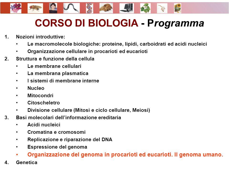CORSO DI BIOLOGIA - Programma 1.Nozioni introduttive: Le macromolecole biologiche: proteine, lipidi, carboidrati ed acidi nucleici Organizzazione cell