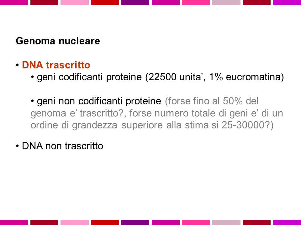 Genoma nucleare DNA trascritto geni codificanti proteine (22500 unita', 1% eucromatina) geni non codificanti proteine (forse fino al 50% del genoma e'