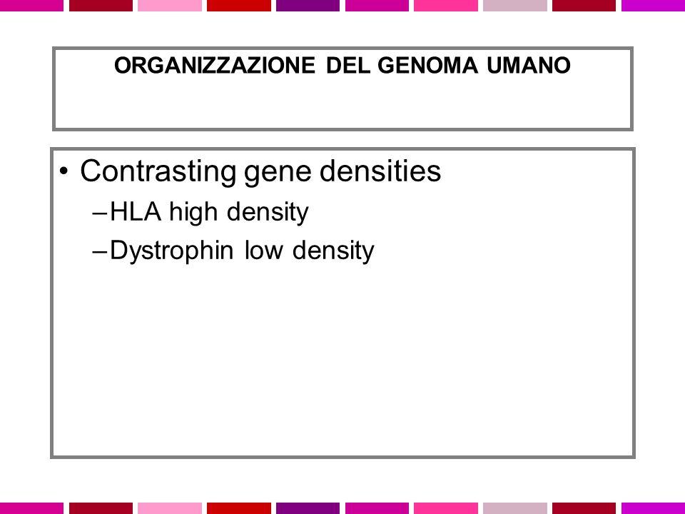 Contrasting gene densities –HLA high density –Dystrophin low density ORGANIZZAZIONE DEL GENOMA UMANO