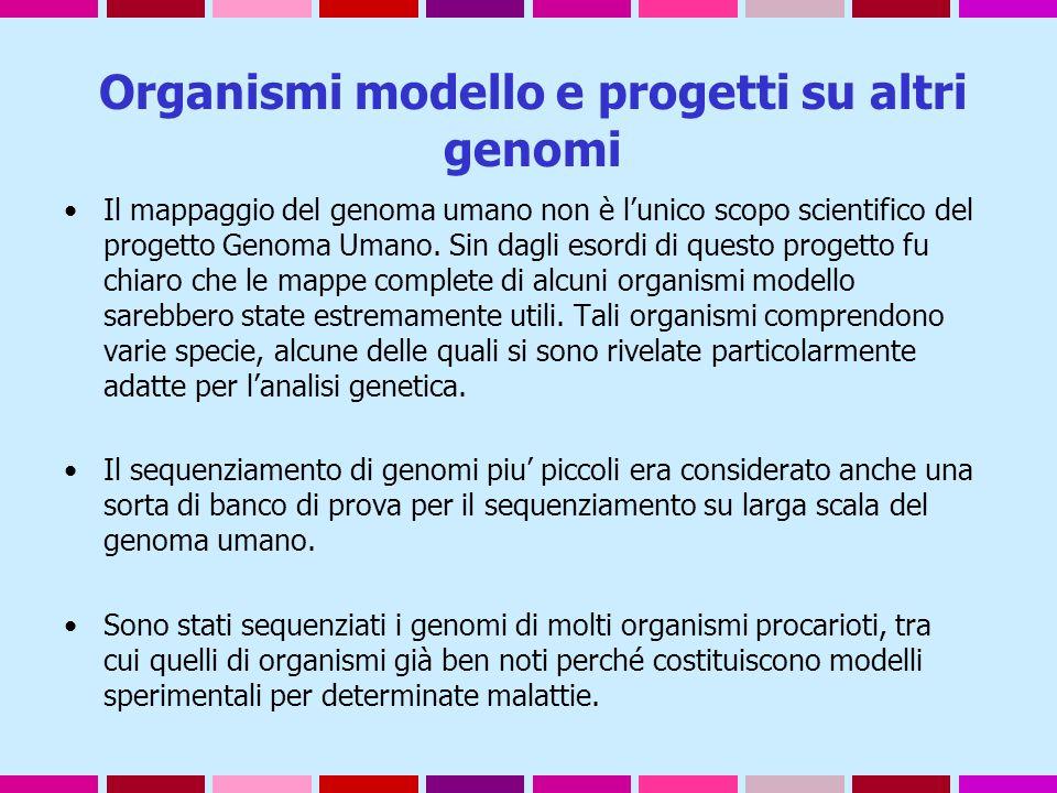 Organismi modello e progetti su altri genomi Il mappaggio del genoma umano non è l'unico scopo scientifico del progetto Genoma Umano. Sin dagli esordi