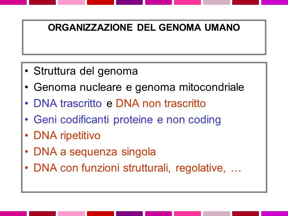 ORGANIZZAZIONE DEL GENOMA UMANO Struttura del genoma Genoma nucleare e genoma mitocondriale DNA trascritto e DNA non trascritto Geni codificanti prote