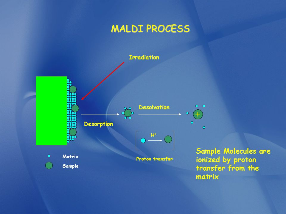 Irradiation Desorption H+H+ Proton transfer Desolvation Matrix Sample MALDI PROCESS Sample Molecules are ionized by proton transfer from the matrix