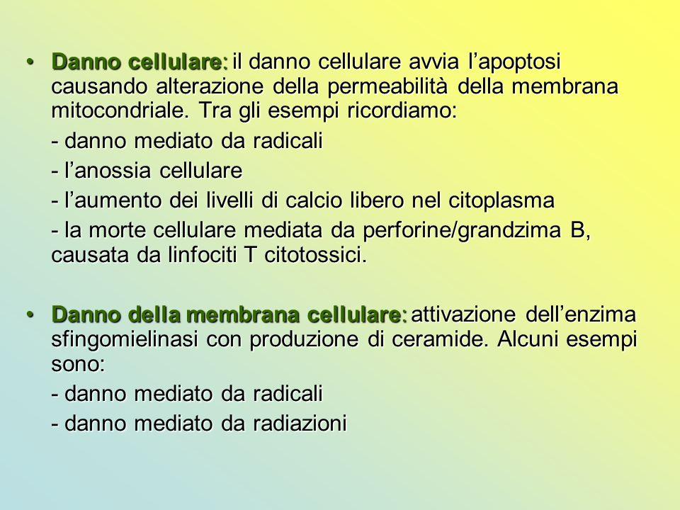 Danno cellulare: il danno cellulare avvia l'apoptosi causando alterazione della permeabilità della membrana mitocondriale. Tra gli esempi ricordiamo:D