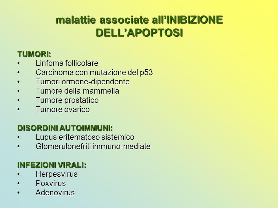 malattie associate all'INIBIZIONE DELL'APOPTOSI TUMORI: Linfoma follicolareLinfoma follicolare Carcinoma con mutazione del p53Carcinoma con mutazione