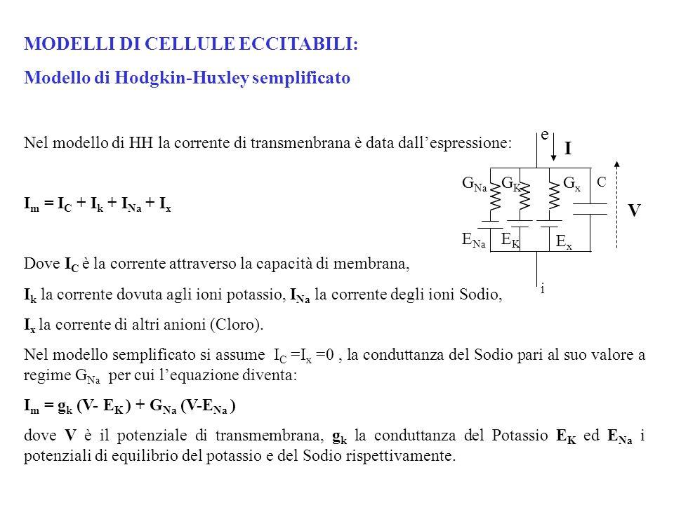 MODELLI DI CELLULE ECCITABILI: Modello di Hodgkin-Huxley semplificato Nel modello di HH la corrente di transmenbrana è data dall'espressione: I m = I