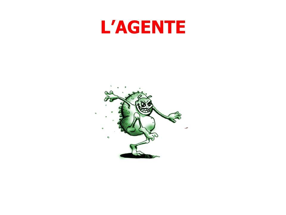 L'AGENTE