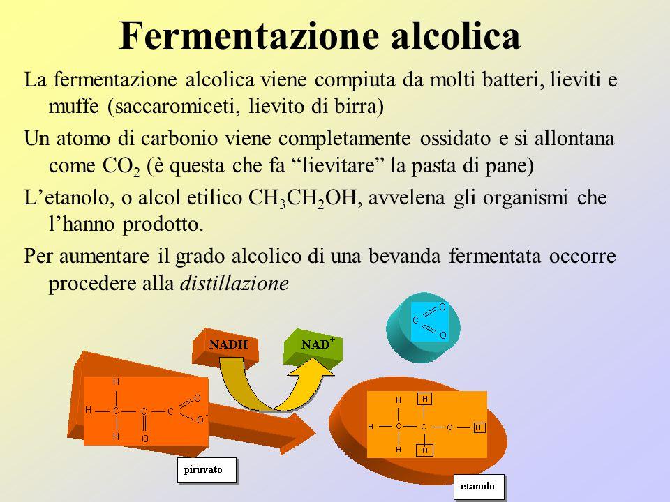 Le fermentazioni Gli elettroni e i protoni sottratti alle molecole di glucosio non possono rimanere sugli accettori temporanei Occorre scaricare quest