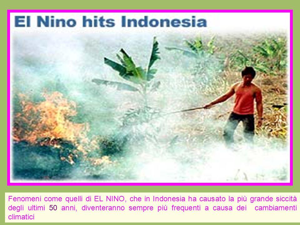 Fenomeni come quelli di EL NINO, che in Indonesia ha causato la più grande siccità degli ultimi 50 anni, diventeranno sempre più frequenti a causa dei cambiamenti climatici