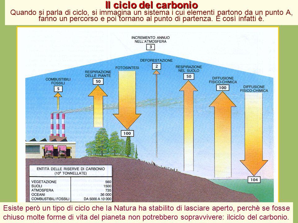 Il ciclo del carbonio Il ciclo del carbonio Quando si parla di ciclo, si immagina un sistema i cui elementi partono da un punto A, fanno un percorso e