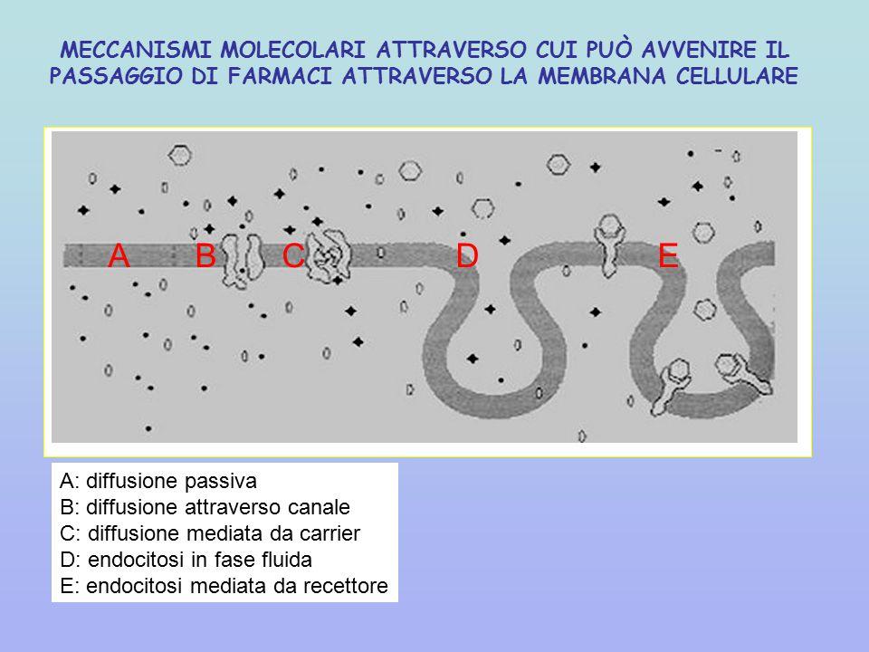 MECCANISMI MOLECOLARI ATTRAVERSO CUI PUÒ AVVENIRE IL PASSAGGIO DI FARMACI ATTRAVERSO LA MEMBRANA CELLULARE ABCD E A: diffusione passiva B: diffusione attraverso canale C: diffusione mediata da carrier D: endocitosi in fase fluida E: endocitosi mediata da recettore