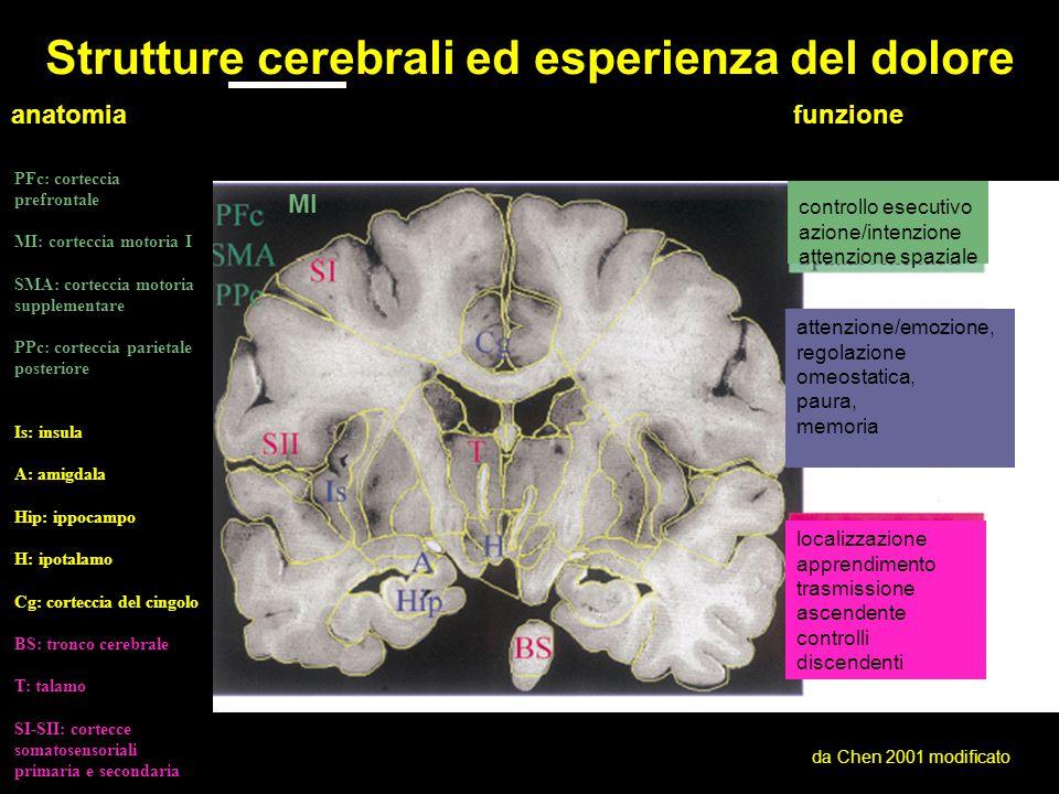 funzione controllo esecutivo azione/intenzione attenzione spaziale attenzione/emozione, regolazione omeostatica, paura, memoria localizzazione apprendimento trasmissione ascendente controlli discendenti MI da Chen 2001 modificato anatomia Strutture cerebrali ed esperienza del dolore PFc: corteccia prefrontale MI: corteccia motoria I SMA: corteccia motoria supplementare PPc: corteccia parietale posteriore Is: insula A: amigdala Hip: ippocampo H: ipotalamo Cg: corteccia del cingolo BS: tronco cerebrale T: talamo SI-SII: cortecce somatosensoriali primaria e secondaria