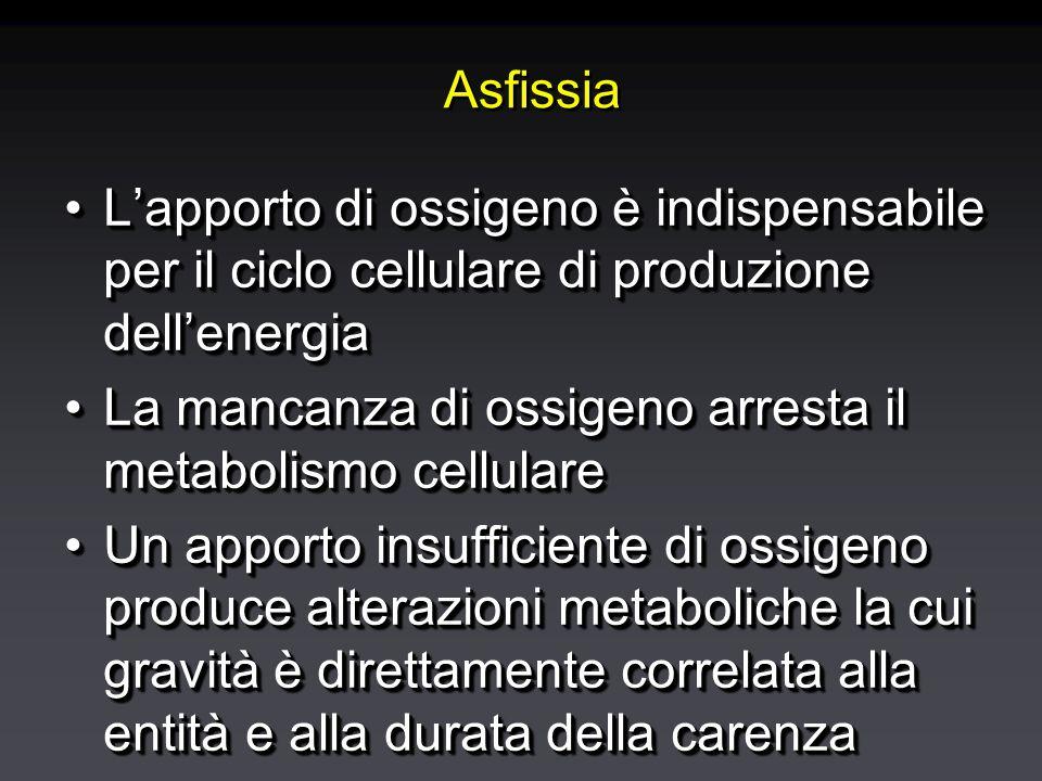 Asfissia L'apporto di ossigeno è indispensabile per il ciclo cellulare di produzione dell'energiaL'apporto di ossigeno è indispensabile per il ciclo cellulare di produzione dell'energia La mancanza di ossigeno arresta il metabolismo cellulareLa mancanza di ossigeno arresta il metabolismo cellulare Un apporto insufficiente di ossigeno produce alterazioni metaboliche la cui gravità è direttamente correlata alla entità e alla durata della carenzaUn apporto insufficiente di ossigeno produce alterazioni metaboliche la cui gravità è direttamente correlata alla entità e alla durata della carenza L'apporto di ossigeno è indispensabile per il ciclo cellulare di produzione dell'energiaL'apporto di ossigeno è indispensabile per il ciclo cellulare di produzione dell'energia La mancanza di ossigeno arresta il metabolismo cellulareLa mancanza di ossigeno arresta il metabolismo cellulare Un apporto insufficiente di ossigeno produce alterazioni metaboliche la cui gravità è direttamente correlata alla entità e alla durata della carenzaUn apporto insufficiente di ossigeno produce alterazioni metaboliche la cui gravità è direttamente correlata alla entità e alla durata della carenza