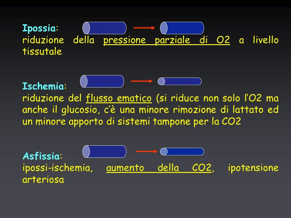 Ipossia: riduzione della pressione parziale di O2 a livello tissutale Ischemia: riduzione del flusso ematico (si riduce non solo l'O2 ma anche il glucosio, c'è una minore rimozione di lattato ed un minore apporto di sistemi tampone per la CO2 Asfissia: ipossi-ischemia, aumento della CO2, ipotensione arteriosa