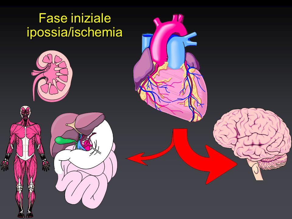 Fase iniziale ipossia/ischemia