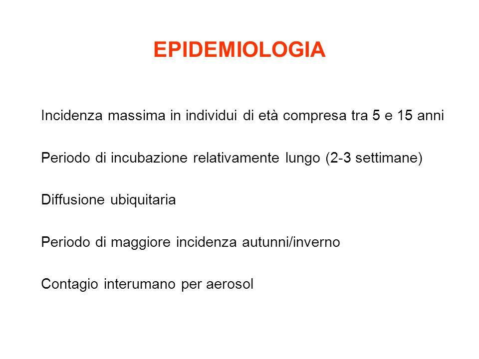 EPIDEMIOLOGIA Incidenza massima in individui di età compresa tra 5 e 15 anni Periodo di incubazione relativamente lungo (2-3 settimane) Diffusione ubi
