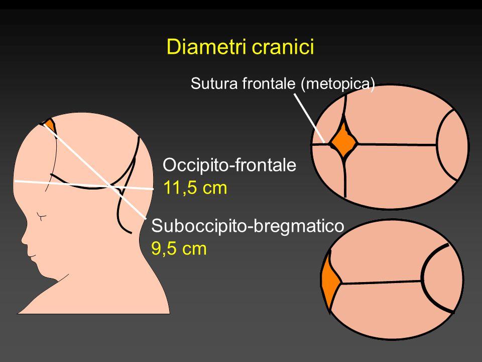 Diametri cranici Suboccipito-bregmatico 9,5 cm Occipito-frontale 11,5 cm Sutura frontale (metopica)