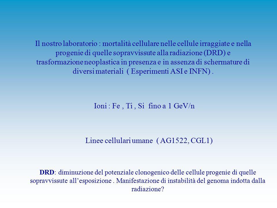 Il nostro laboratorio : mortalità cellulare nelle cellule irraggiate e nella progenie di quelle sopravvissute alla radiazione (DRD) e trasformazione neoplastica in presenza e in assenza di schermature di diversi materiali ( Esperimenti ASI e INFN).