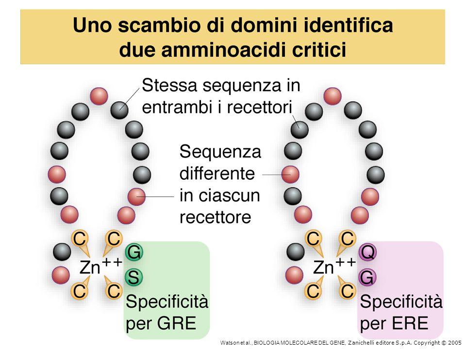 Domini di attivazione Domini acidici: es.GAL4 Domini ricchi di glutammine: es.