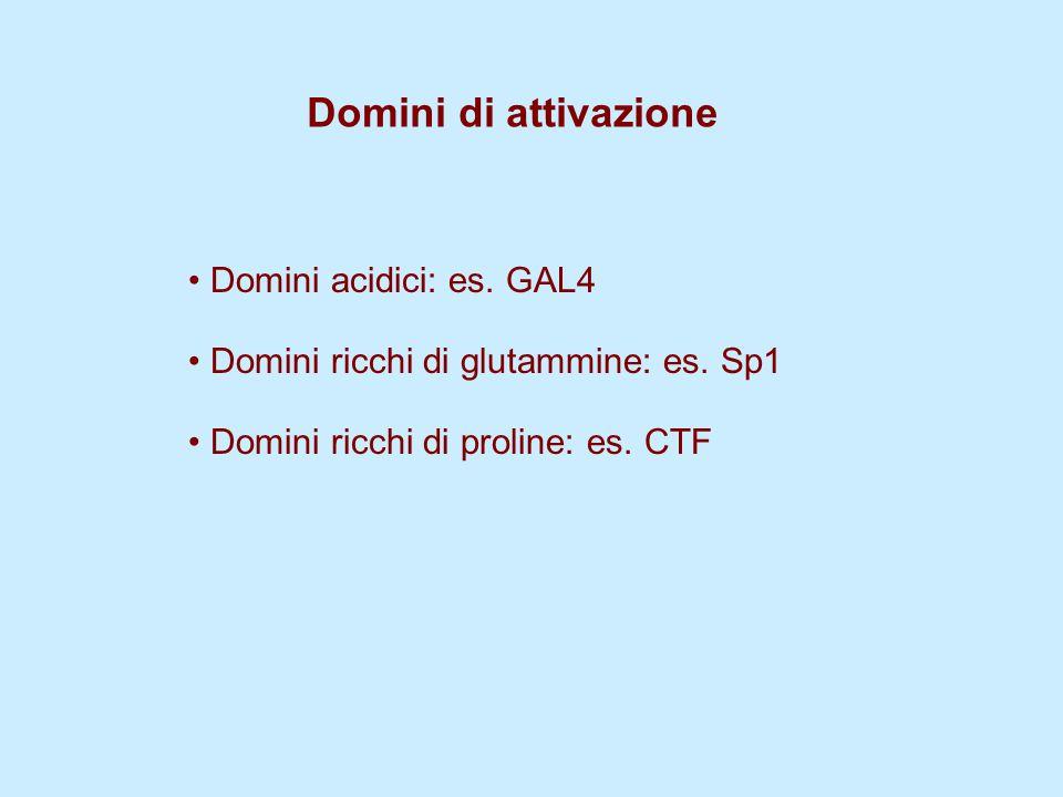 Domini di attivazione Domini acidici: es. GAL4 Domini ricchi di glutammine: es. Sp1 Domini ricchi di proline: es. CTF
