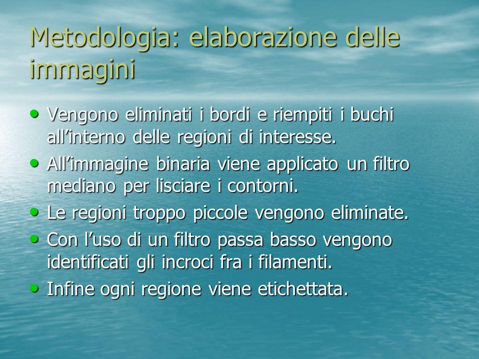 Metodologia: elaborazione delle immagini a.immagine al microscopio.