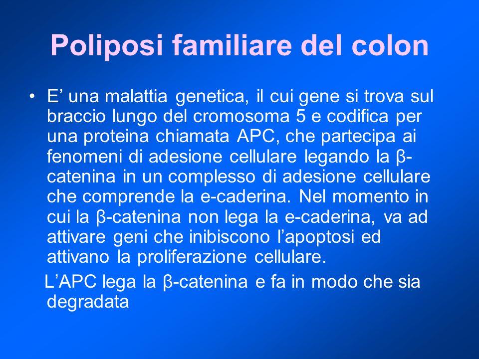 Poliposi familiare del colon E' una malattia genetica, il cui gene si trova sul braccio lungo del cromosoma 5 e codifica per una proteina chiamata APC, che partecipa ai fenomeni di adesione cellulare legando la β- catenina in un complesso di adesione cellulare che comprende la e-caderina.