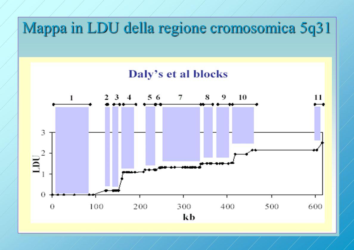 Mappa in LDU della regione cromosomica 5q31