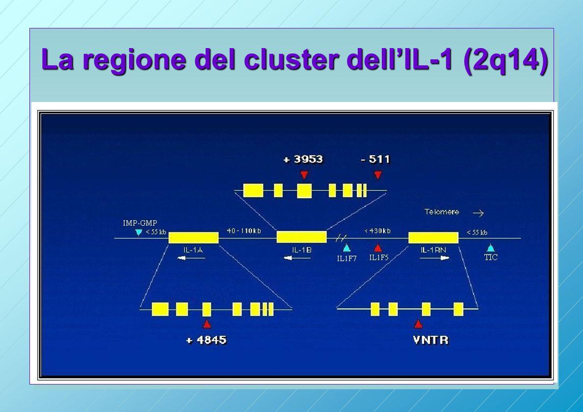 La regione del cluster dell'IL-1 (2q14)