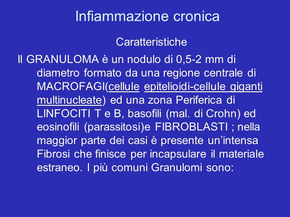 Infiammazione cronica Caratteristiche Il GRANULOMA è un nodulo di 0,5-2 mm di diametro formato da una regione centrale di MACROFAGI(cellule epitelioid