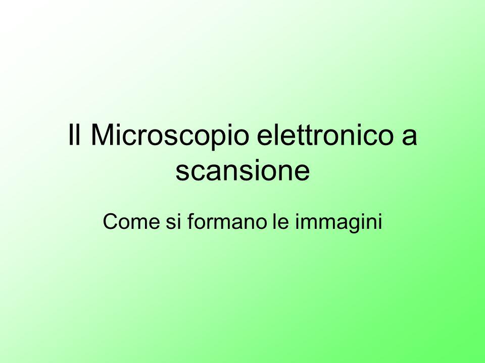 Il Microscopio elettronico a scansione Come si formano le immagini
