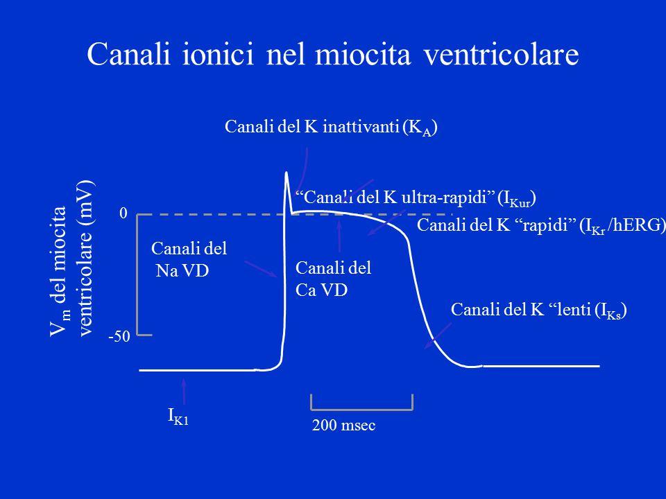 Canali del potassio e aritmie cardiache