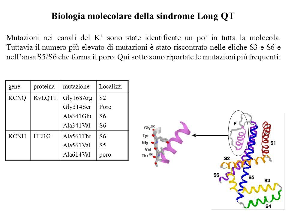 Genetica della sindrome Long QT Mutazioni nei geni che codificano i canali al K + cardiaci sono le più comuni cause della sindrome Long QT. Difetti ne
