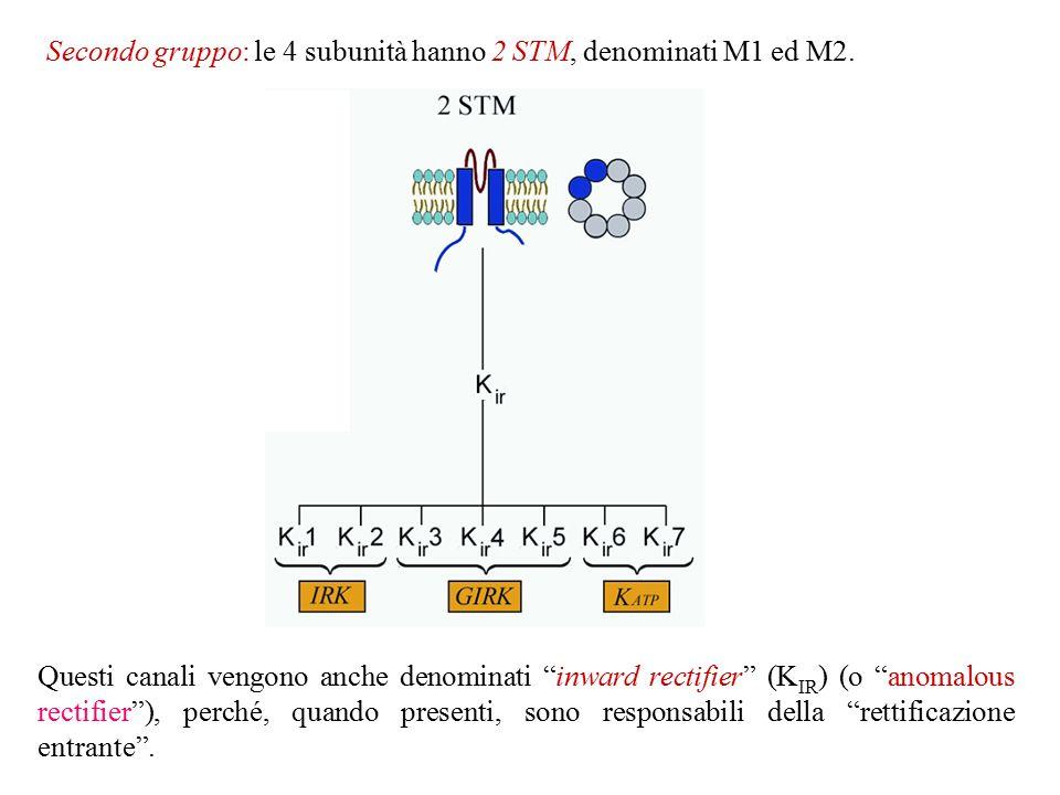 Biologia molecolare della sindrome Long QT Mutazioni nei canali del K + sono state identificate un po' in tutta la molecola.