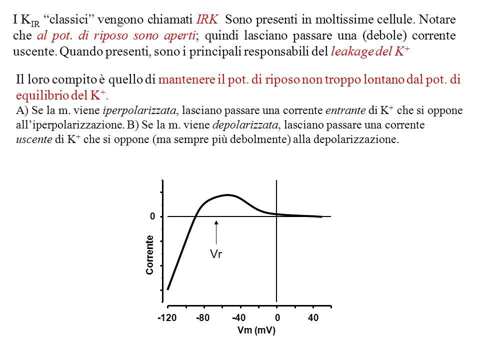 """I canali K IR sono equivalenti al """"nocciolo"""" interno dei K V, quindi mancano del sensore del voltaggio (S4). Di conseguenza, la voltaggio-dipendenza d"""